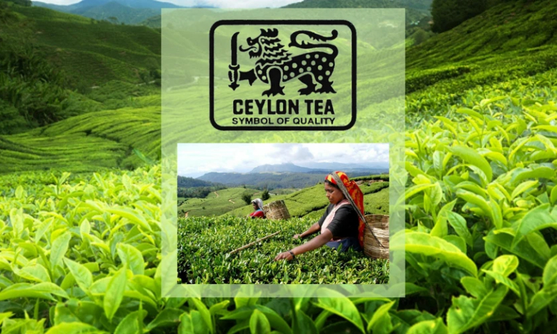 Sri Lanka to sign MoU with China to market Pure Ceylon Tea both online and offline