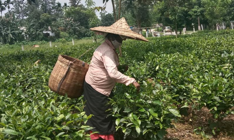 Assam Tea Estate Workers See Wage Hike